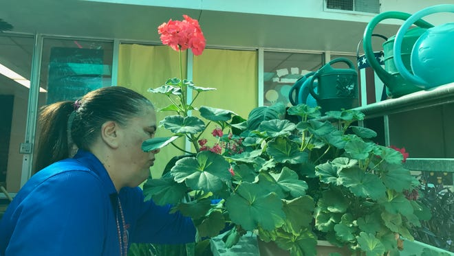 Mesa Vista Elementary School head custodian Annette Payan tends to plants in the school's greenhouse. She said she comes in early to work each day to take care of the plants.