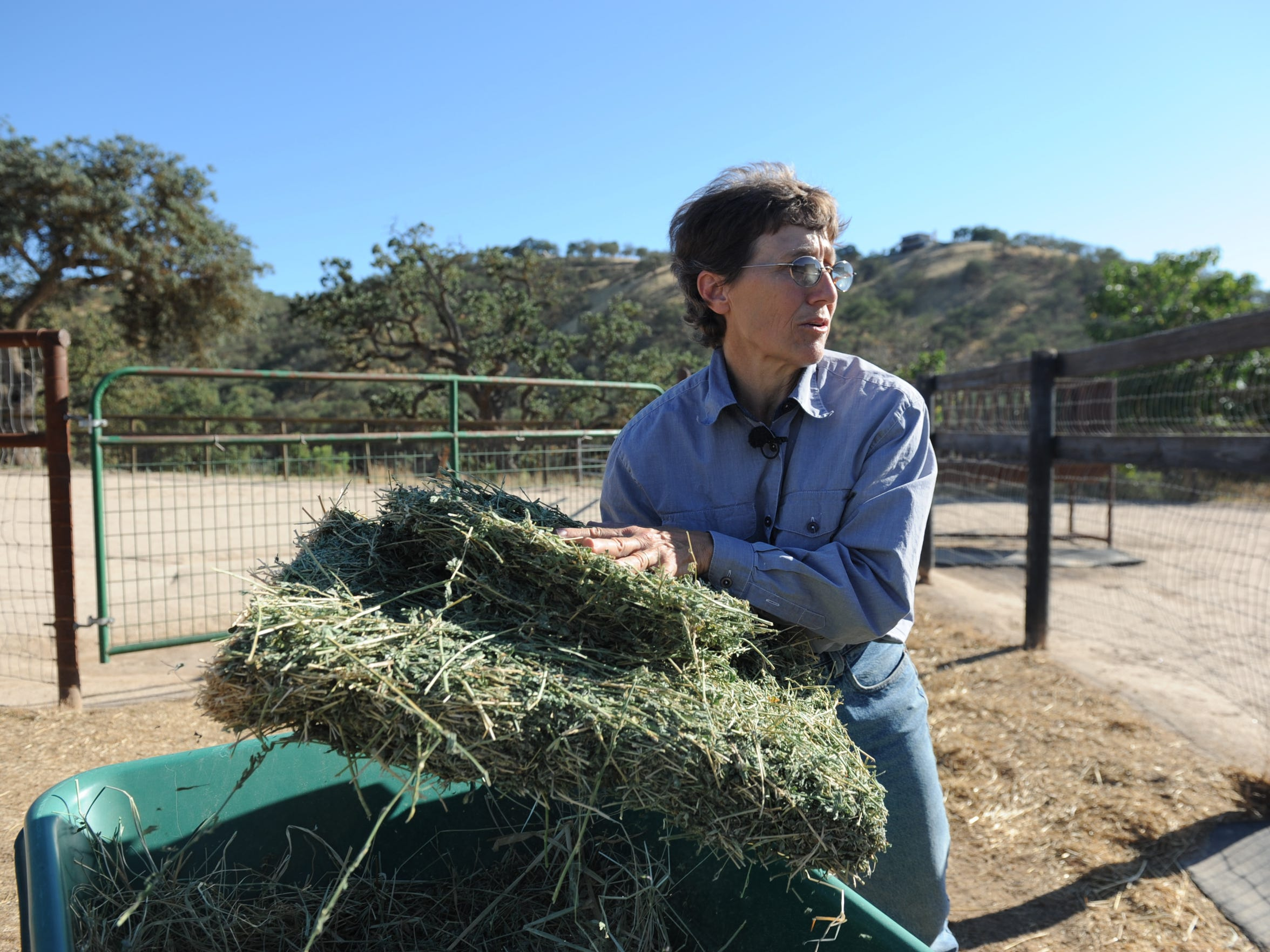 Laurie Gage carries hay to feed the horses at her farm