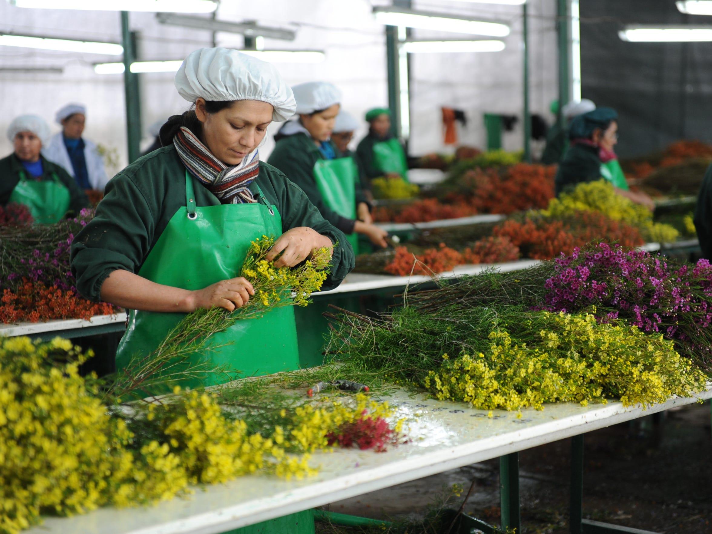 08132015 -- Villacurí, Peru --María Campos prepares