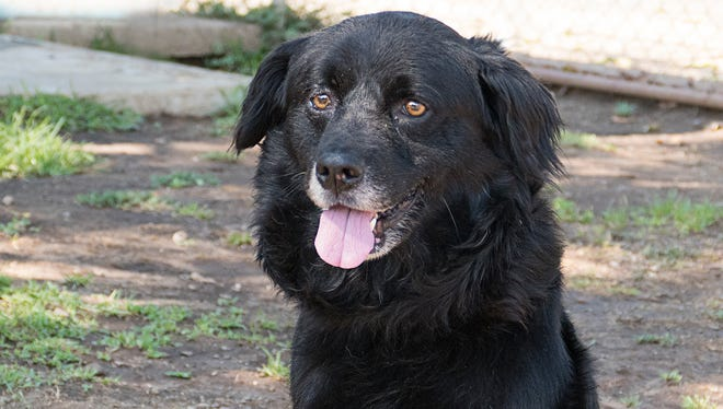 Shadow is available for adoption at the Agoura Shelter.