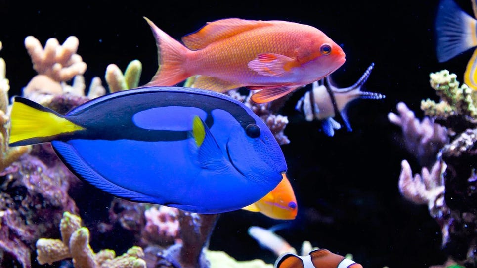 Daily Record Aquaholics Reef Fish