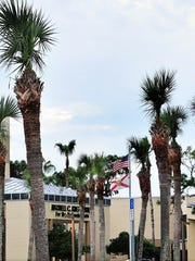 TRIMMED PALMS 8