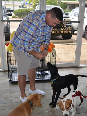 Clive, a 4-month-old black lab and Weimaraner mix, eagerly waits for a treat from The Pet Shop of Fondren owner Josh Gilmer.