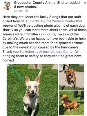 Gloucester County Animal Shelter is housing eight dogs from areas impacted by hurricanes Irma and Harvey.