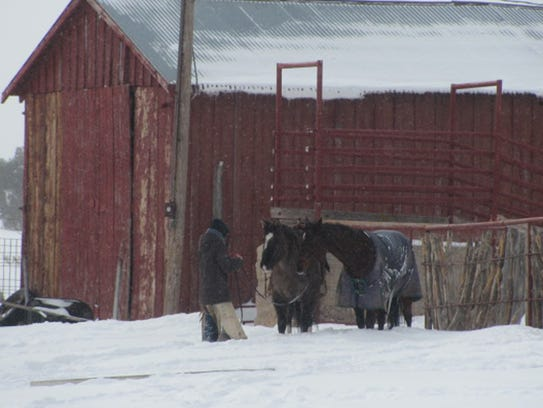 In times of blizzards, a solid broke horse that will
