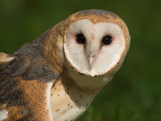 Meet Twiggy, St. Francis Wildlife's non-releasable