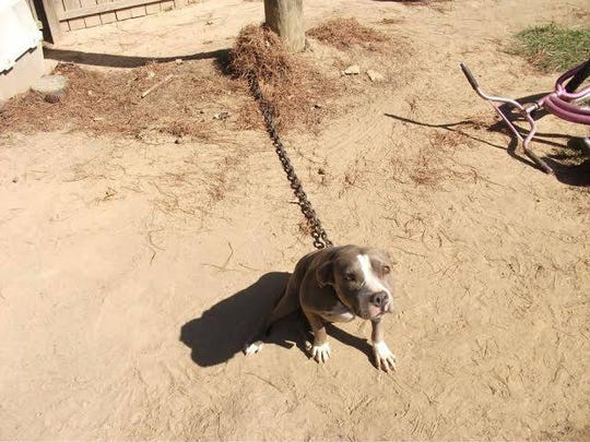 Angel lived the first two years of her life chained, used as a breeder.