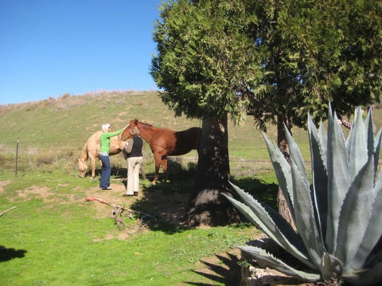 Tucked right behind historic Mission Santa Ysabel are horse pastures, cacti and grassy fields.