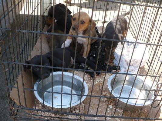 AnimalRegulations.3