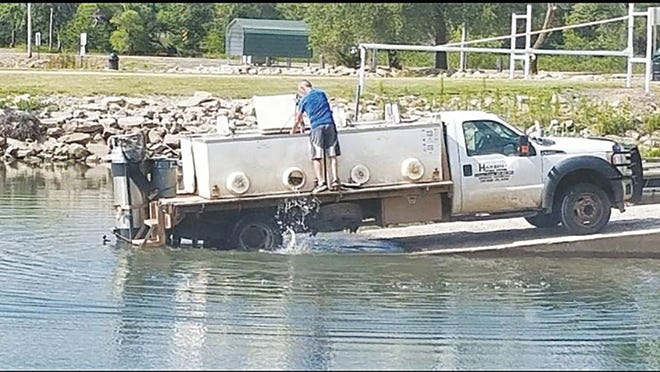 Adult channel catfish and blue gills splash into the Pratt County Veterans Memorial Lake from holding tanks on a private fish contractor's truck in July 2019.