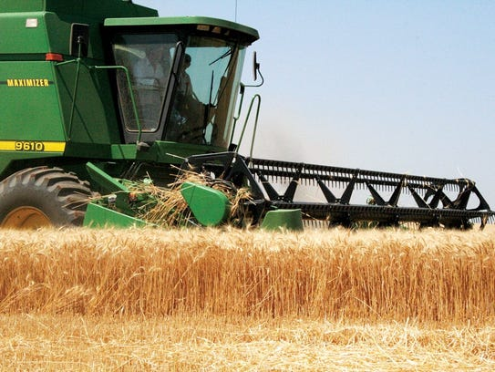 A combine works to harvest a wheat crop. Wheat is the