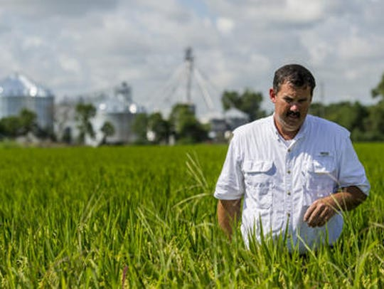 Acadiana producer Richard Fonenot farms 2,000 acres