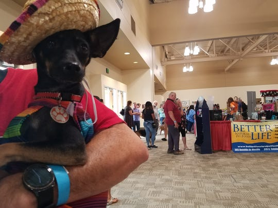 Diego, a chihuahua dressed in a sombrero and poncho at the first-annual DogCruces Pet Expo on Saturday, Sept. 9.
