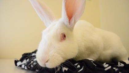 Pecan the rabbit