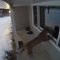 Cougar makes its way right up to Brookfield home