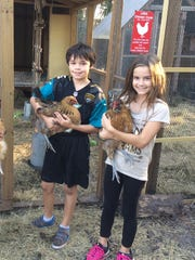 Schools such as Lawton Elementary in Oviedo, Florida, are including chickens as a part of curriculum to provide students with hands-on experience with agriculture. In addition to being fun for the classroom, schoolyard chickens help educate students on biology, animal care and where their food comes from.