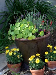 Lavender and nasturtium grow in a pot on a patio. Bees love lavender, and depending on the color, nasturtiums. Bees seem to like bright whites and yellows, while butterflies appear drawn to reds and purples.