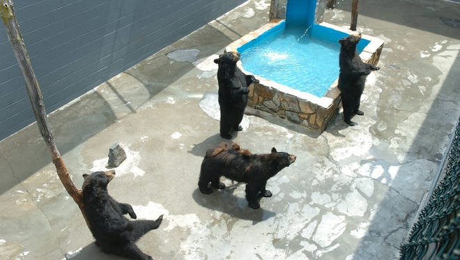 A lawsuit against Cherokee Bear Zoo about the well being of four grizzly bears began Thursday in the U.S. District Court for the Western District of North Carolina in Asheville.