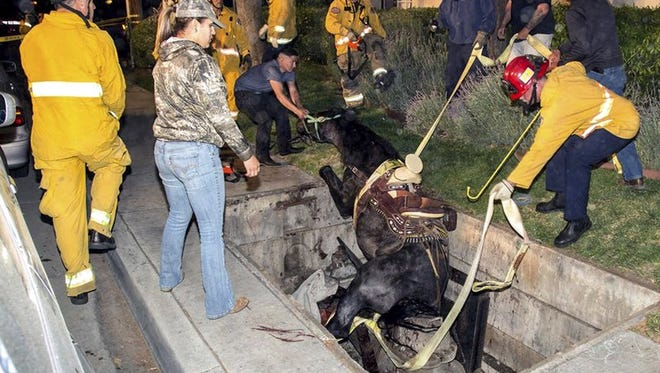 Authorities say the horse escaped serious injury.