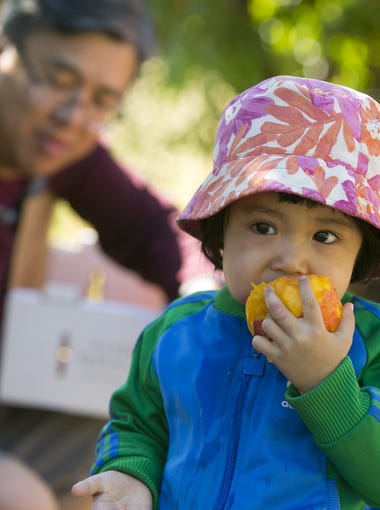 Jade Woo, 2, of Gilbert, eats a peach, as her father, Larry Woo of Gilbert, looks on, during the annual Peach Festival at Schnepf Farms in Queen Creek on Saturday, May 9, 2015.