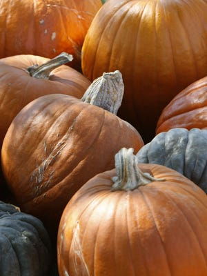 It's not officially fall until you've picked out the perfect pumpkin.
