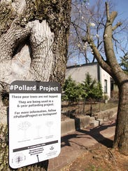 Louisville officials approved the severe pruning of