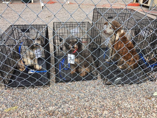 Seventy-four dogs were removed from a hoarding situation