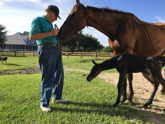 A newborn colt, named Son of Seiva, was born on July