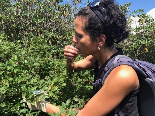 Outdoors writer Karen Chávez eats wild blueberries
