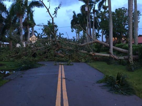 Trees block Hanton-Ave.-in-Fort-Myers