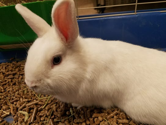 Nivens McTwisp is a young, blue-eyed male rabbit who