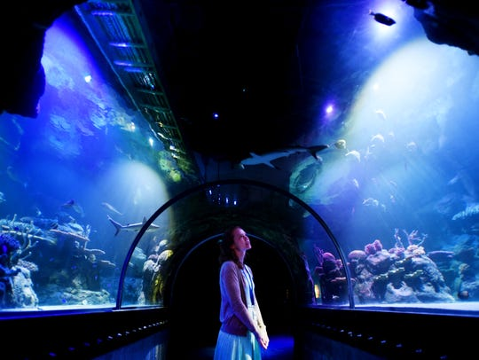 Shreveport Aquarium offers exhibits, hands-on activities and a restaurant overlooking the Red River.