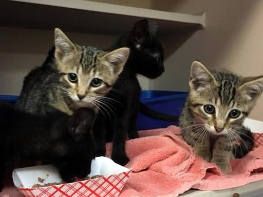 Kittens are available for adoption. They are adorable