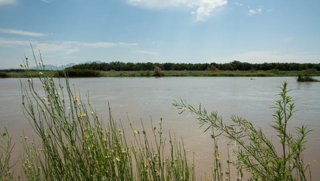 The Mesilla Valley Bosque State Park, takes visitors to the banks of the Rio Grande river along the Resaca trail. Friday Aug. 4, 2017. The park will soon be transferring management to the New Mexico Department of Game and Fish. The transition will begin the fall of 2017.