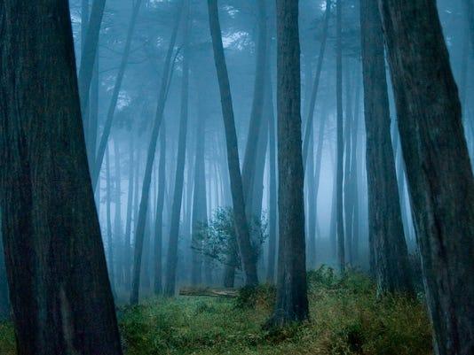 Outdoors_woods.jpg
