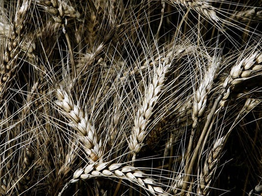 farm- Wheat Field.jpg