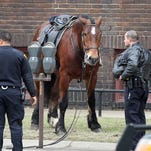 A Cleveland police horse stands in the middle of the street after getting loose Wednesday.
