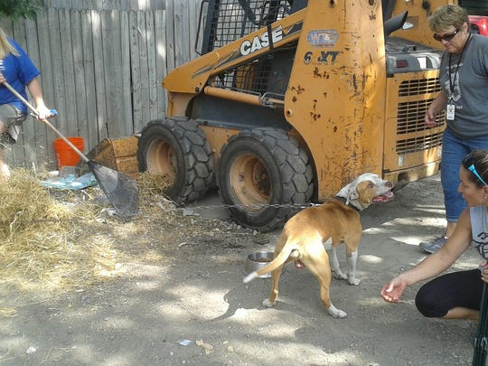 Dawn Lamsa rakes trash and straw while Wendy Leach (standing) and Lesa Whitley try to engage a blind, chained dog.
