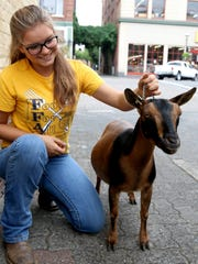 Tiffany Clark takes care of Mamma, a pregnant Nigerian Dwarf goat, who'll be on hand at Oregon's Bounty event at the Capitol Oct. 8.