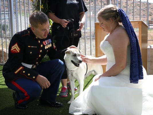 wedding at animal shelter
