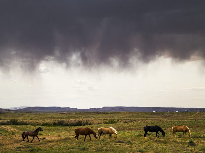 Horses graze in a field while rain falls on the Navajo