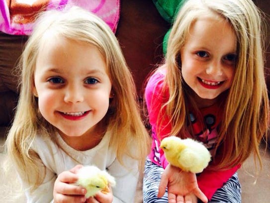 Chickens are becoming a popular option for school curriculum