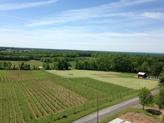 Mount Salem Vineyards.
