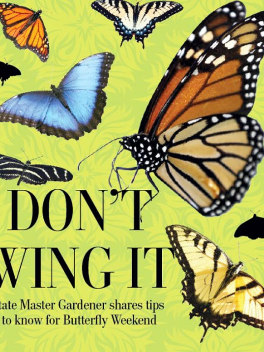 Butterfly graphic.   Samantha Dellinger — Daily Record/Sunday News