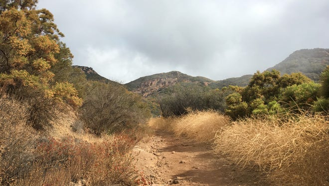 The National Park Service is seeking the public's input on a proposed Invasive Plant Management Plan in the Santa Monica Mountains National Recreation Area.