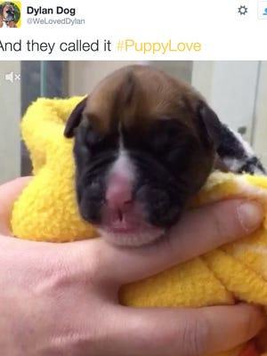 A British couple recently paid thousands of dollars to clone their beloved boxer.