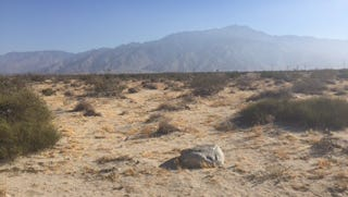 This vacant lot in Desert Hot Springs will soon be home to a new medical marijuana cultivation facility.