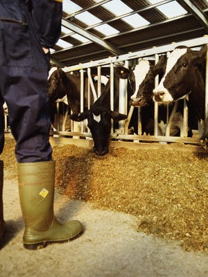 Miller's Organic Farm is likely the source of a listeria outbreak.