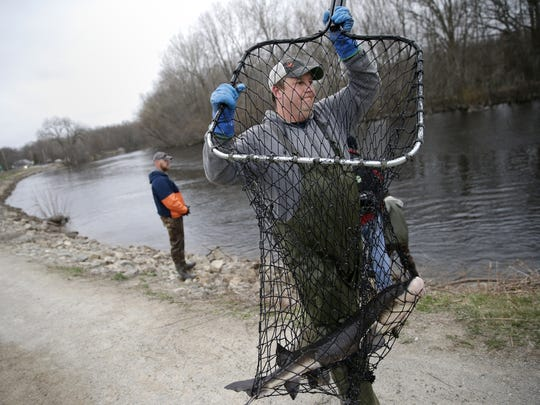 Jason Kohls, a fisheries technician with the Wisconsin Department of Natural Resources, carries a sturgeon in a net to get measured and tagged during sturgeon spawning Tuesday in Shiocton.