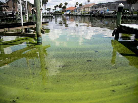 Cyanobacteria, known as toxic blue-green algae, can